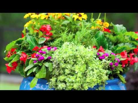 How to: plant a cottage garden in a pot