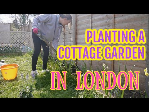 Planting a cottage garden in london / emma's allotment diaries