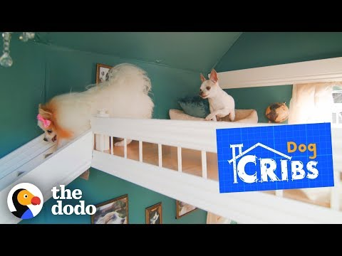 Take a tour of the most luxurious dog houses ever | the dodo
