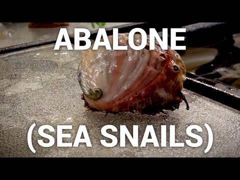 Abalone (sea snails) - seafood at the source, episode 4