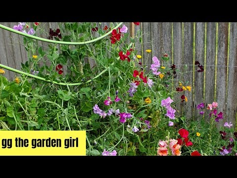 Big changes in the garden // old plants out // new plants in // week 44