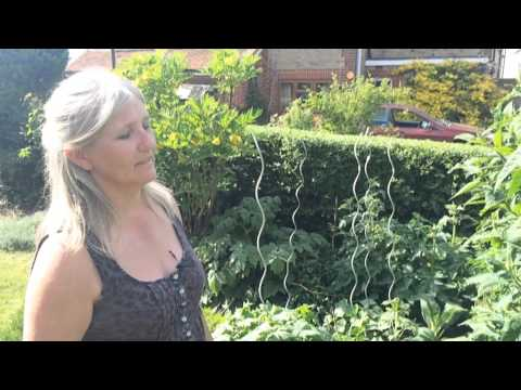 Cottage garden planting in may