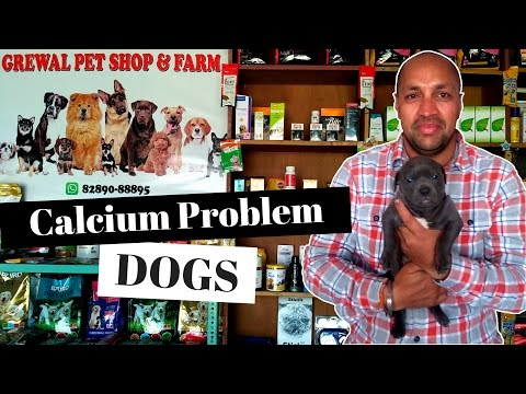 Pet - care | old age | calcium problem in dogs | puppy - bhola shola | harwinder singh grewal