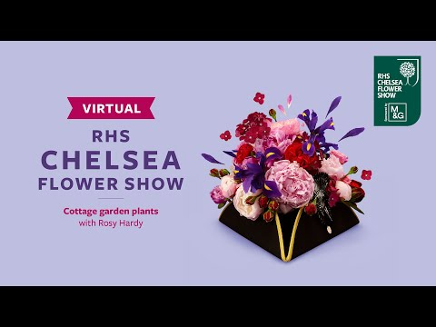 Cottage garden plants with rosy hardy   virtual chelsea flower show   rhs