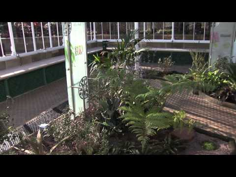 The grand opening of the victorian conservatory