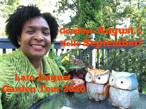 City cottage garden | end of august tour 2020 | things to do now in the garden! | catherine's garden
