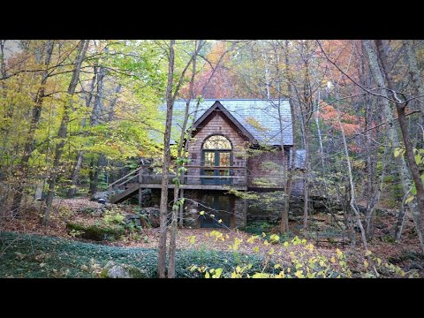 We bought a tiny cottage in the middle of the woods