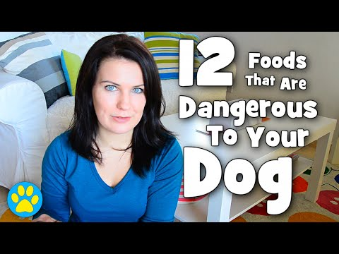 12 dangerous foods for dogs