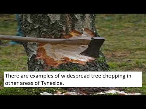 Why is newcastle the tree felling capital of britain? #chopping #cutting