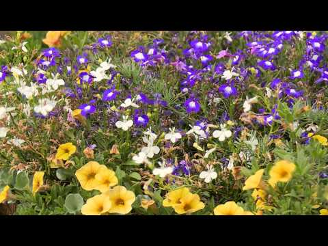 How to create a cottage garden - diy at bunnings