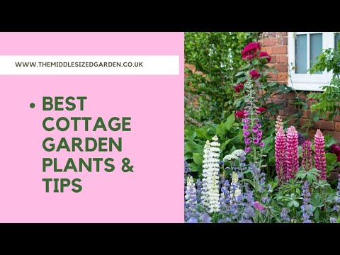 How to create a cottage garden - tips and ideas