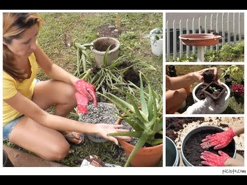 Cottage living: planting an herb garden, container gardening